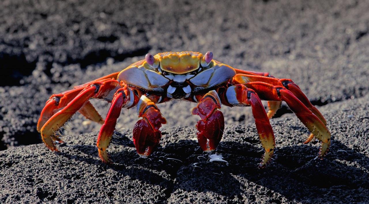 Galapagos 3D : Nature's Wonderland - Bild 6