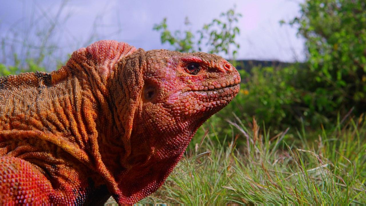 Galapagos 3D : Nature's Wonderland - Bild 9