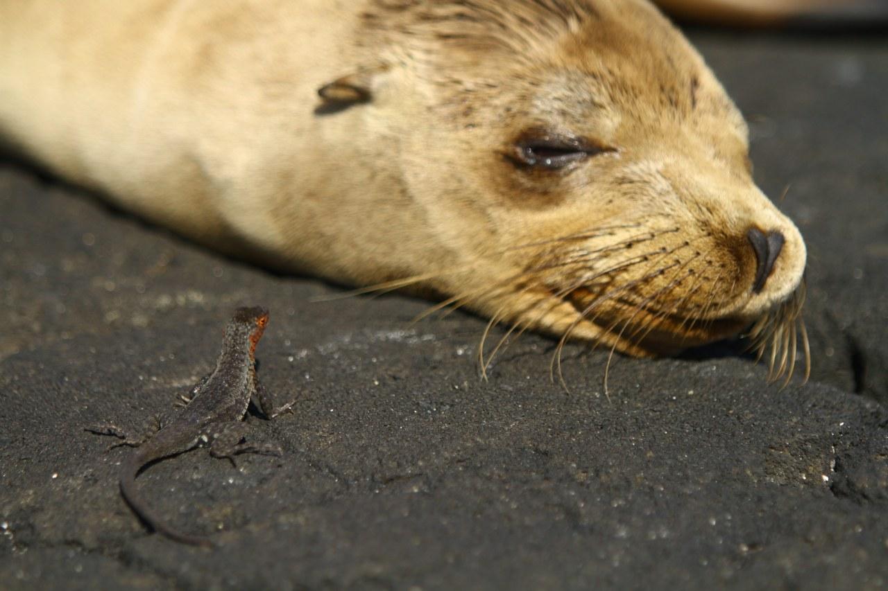 Galapagos 3D : Nature's Wonderland - Bild 10