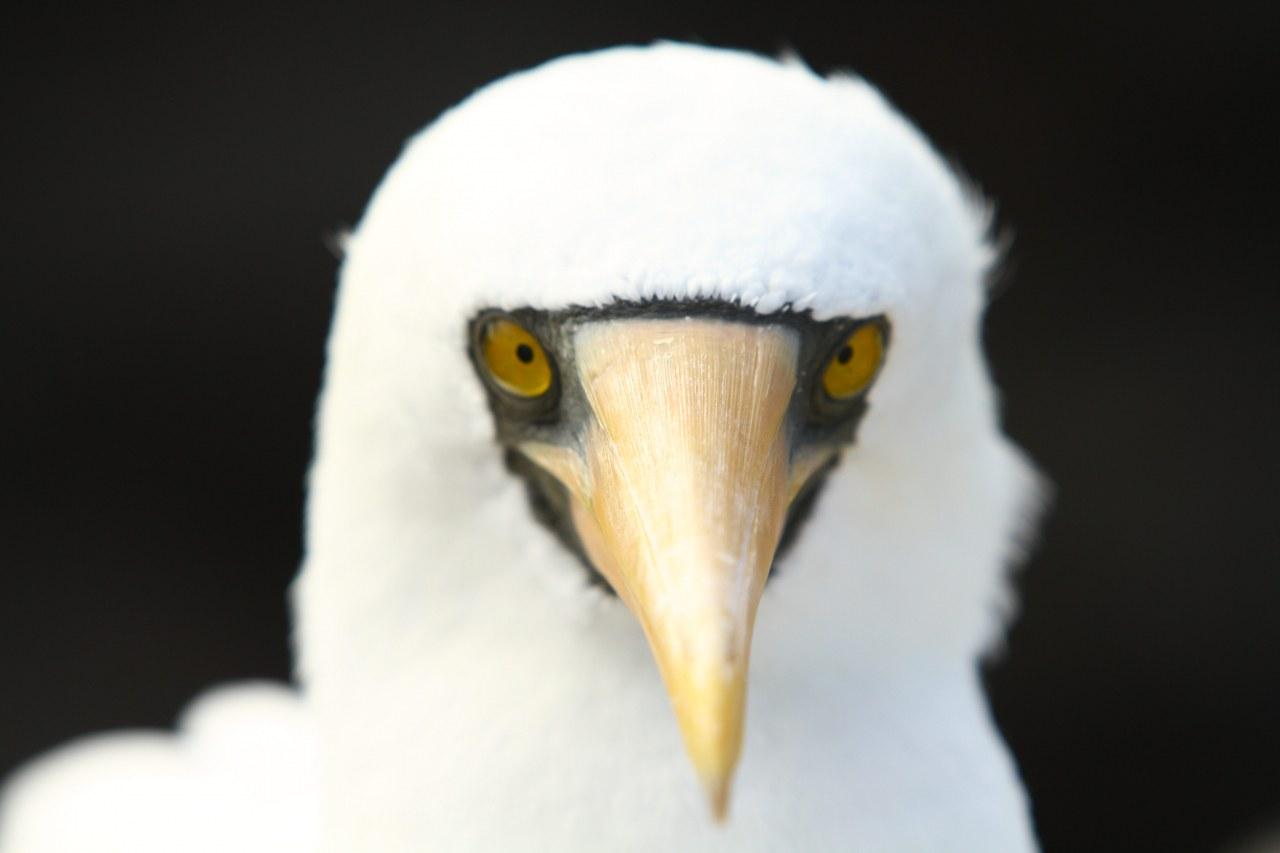 Galapagos 3D : Nature's Wonderland - Bild 11