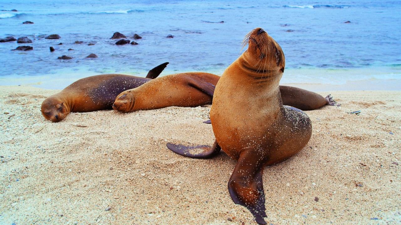 Galapagos 3D : Nature's Wonderland - Bild 13