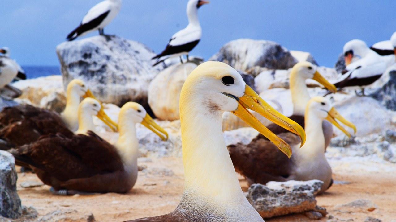 Galapagos 3D : Nature's Wonderland - Bild 14