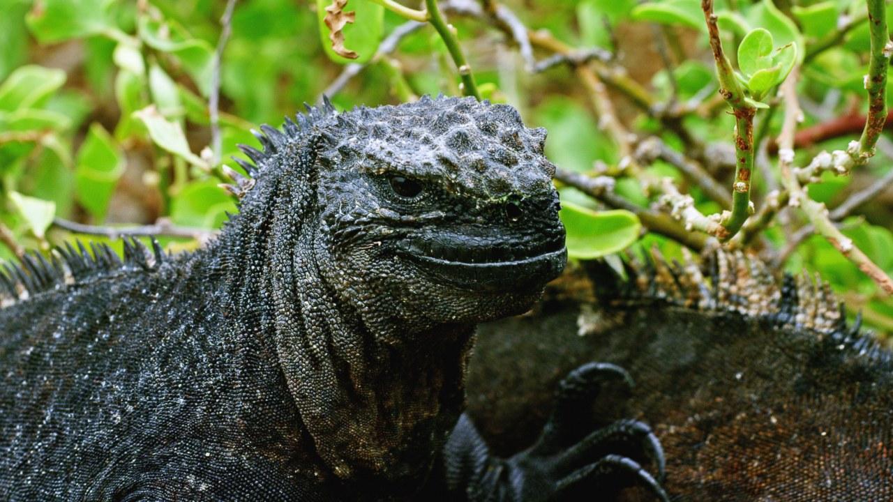 Galapagos 3D : Nature's Wonderland - Bild 15
