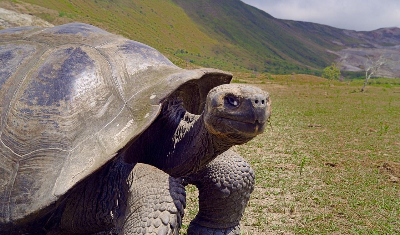 Galapagos 3D : Nature's Wonderland - Bild 16