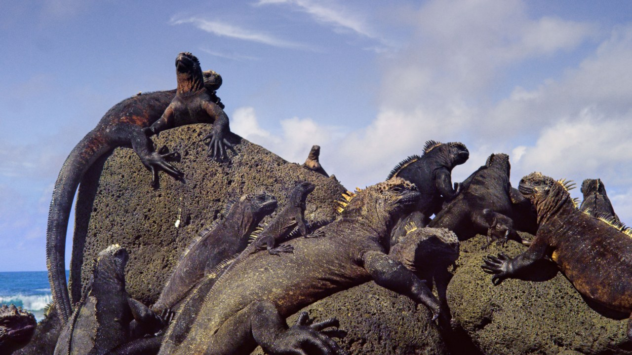 Galapagos 3D : Nature's Wonderland - Bild 18