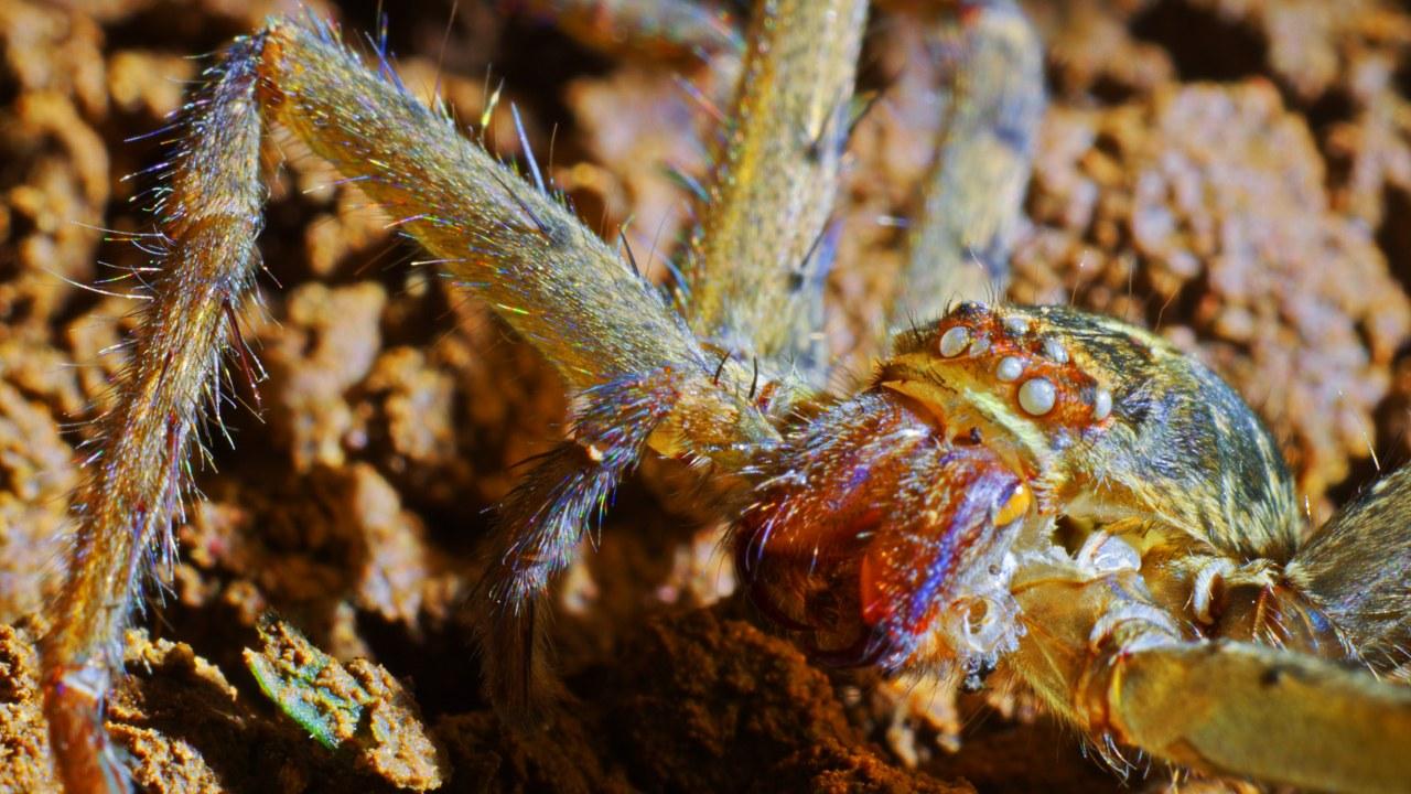 Galapagos 3D : Nature's Wonderland - Bild 17