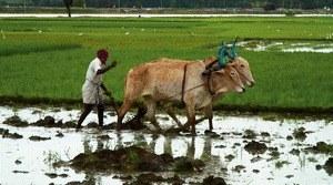 Good Food, Bad Food - Anleitung für eine bessere Landwirtschaft - Bild 1