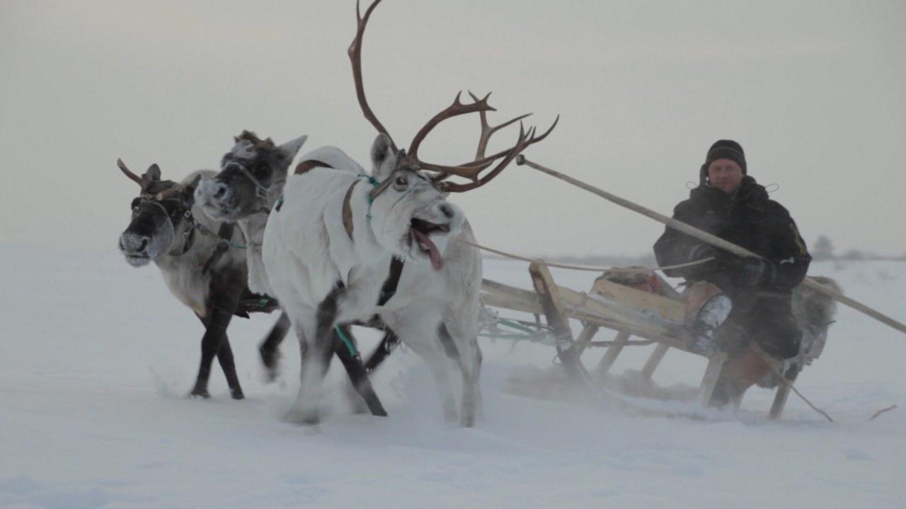 Die Hüter der Tundra - Bild 1