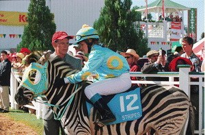Im Rennstall ist das Zebra los! - Bild 1