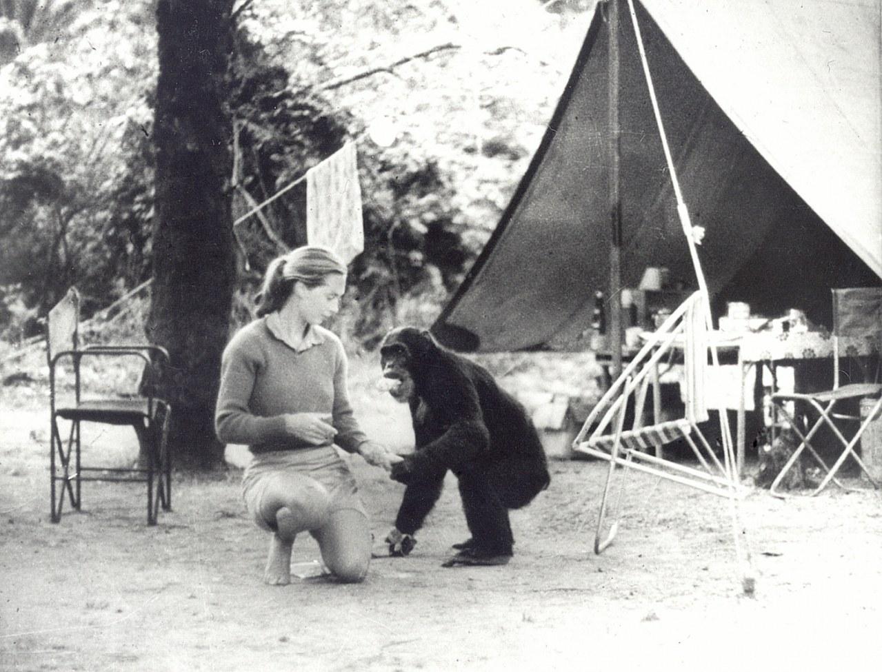 Jane's Journey - Die Lebensreise der Jane Goodall - Bild 4