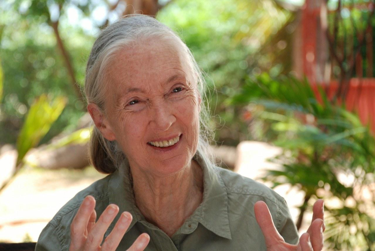 Jane's Journey - Die Lebensreise der Jane Goodall - Bild 10