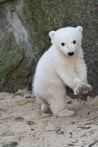 Knut und seine Freunde - Bild 2