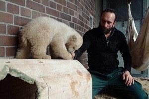 Knut und seine Freunde - Bild 1