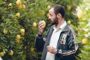 Lemon Tree - Bild 1
