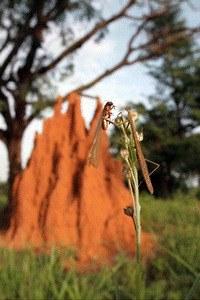 Micropolis - Titanen der Insektenwelt - Bild 2