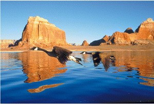 Nomaden der Lüfte - Das Geheimnis der Zugvögel - Bild 1