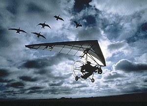 Nomaden der Lüfte - Das Geheimnis der Zugvögel - Bild 2