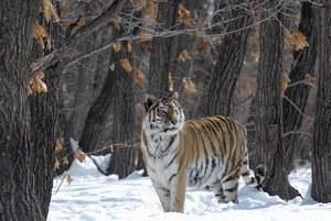 Russland - Im Reich der Tiger, Bären und Vulkane - Bild 1