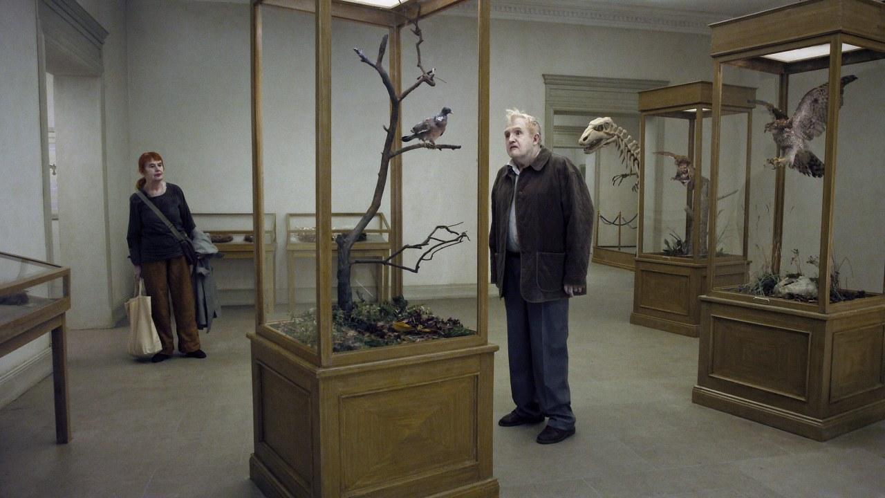 Eine Taube sitzt auf einem Zweig und denkt über das Leben nach - Bild 1