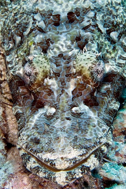 The Last Reef 3D - Bild 3