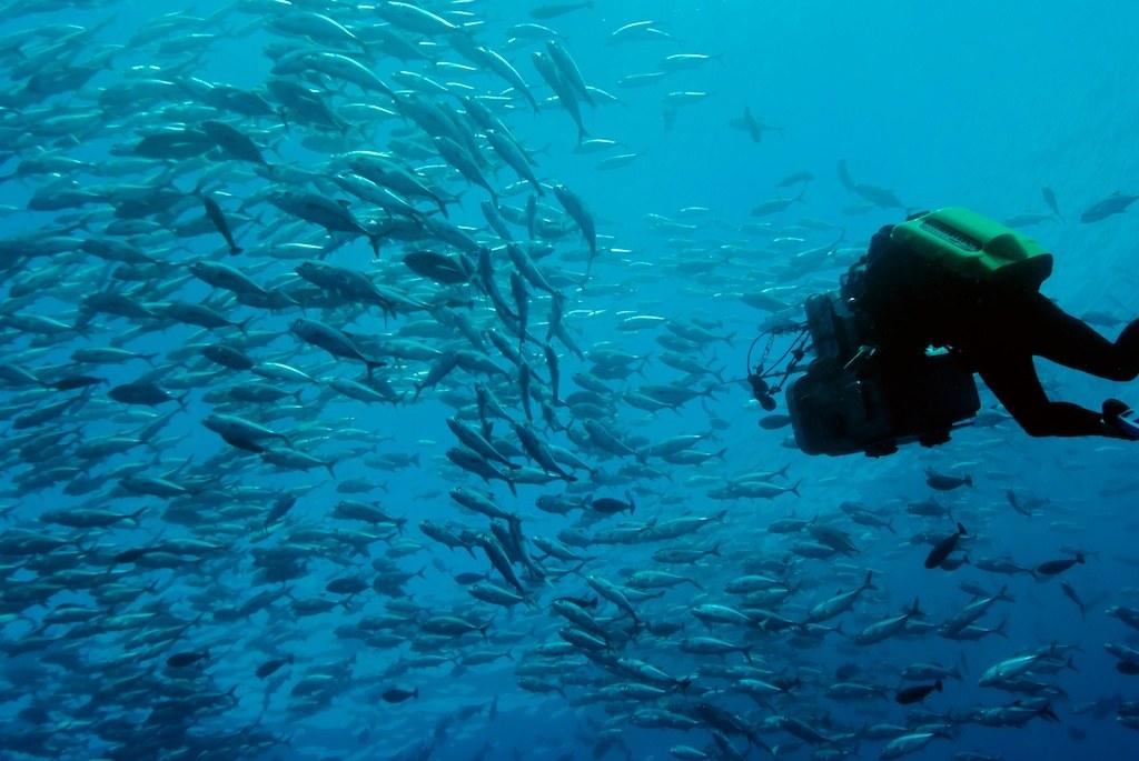 The Last Reef 3D - Bild 4