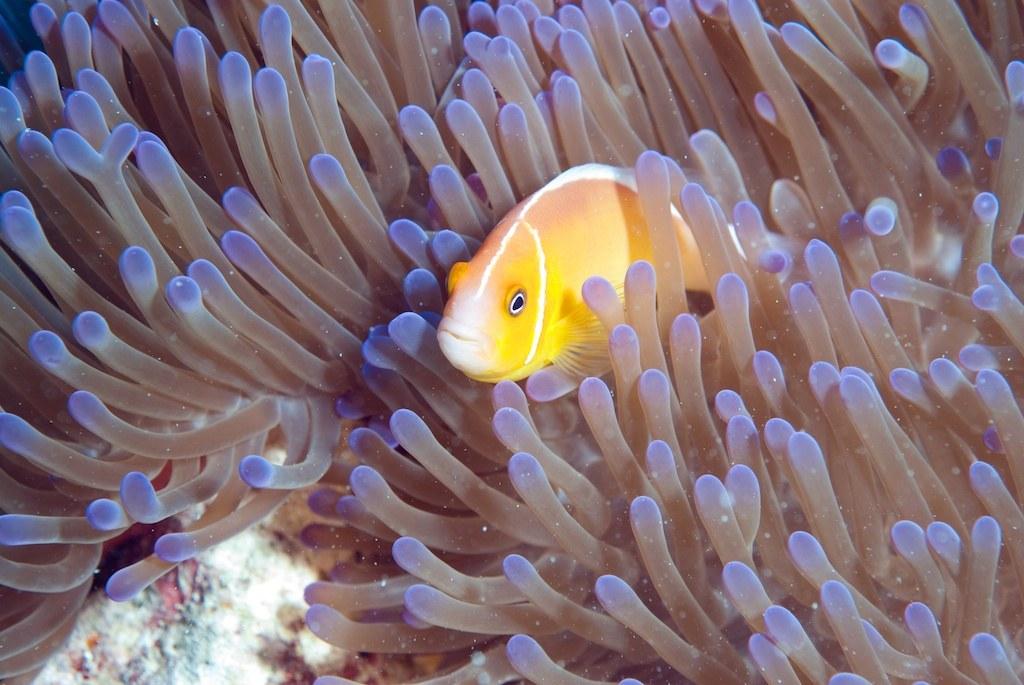 The Last Reef 3D - Bild 6