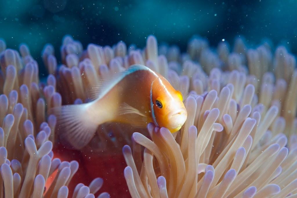 The Last Reef 3D - Bild 7