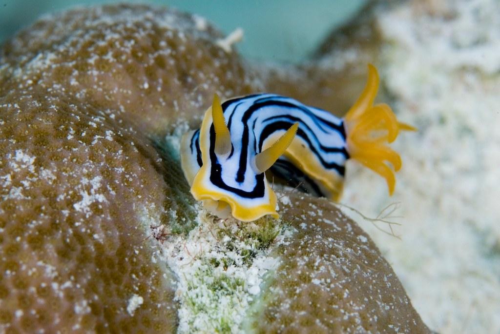 The Last Reef 3D - Bild 13