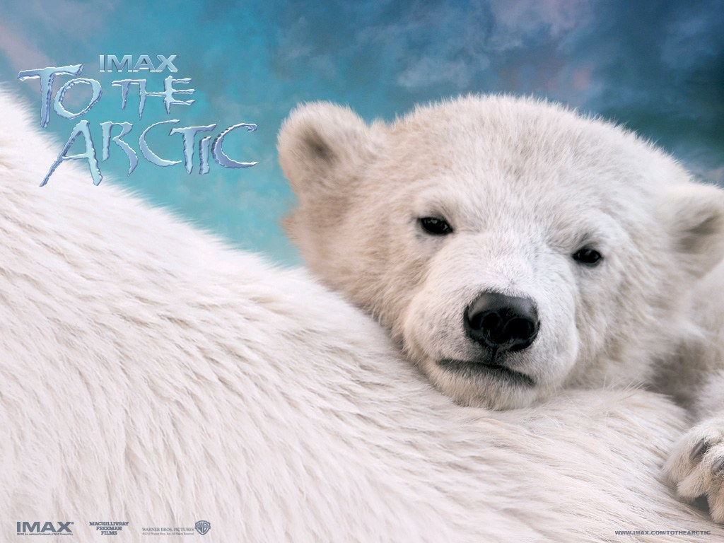 To the Arctic 3D - Bild 1