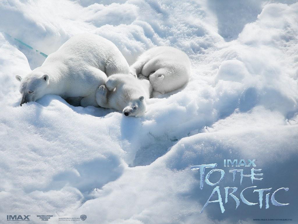 To the Arctic 3D - Bild 2