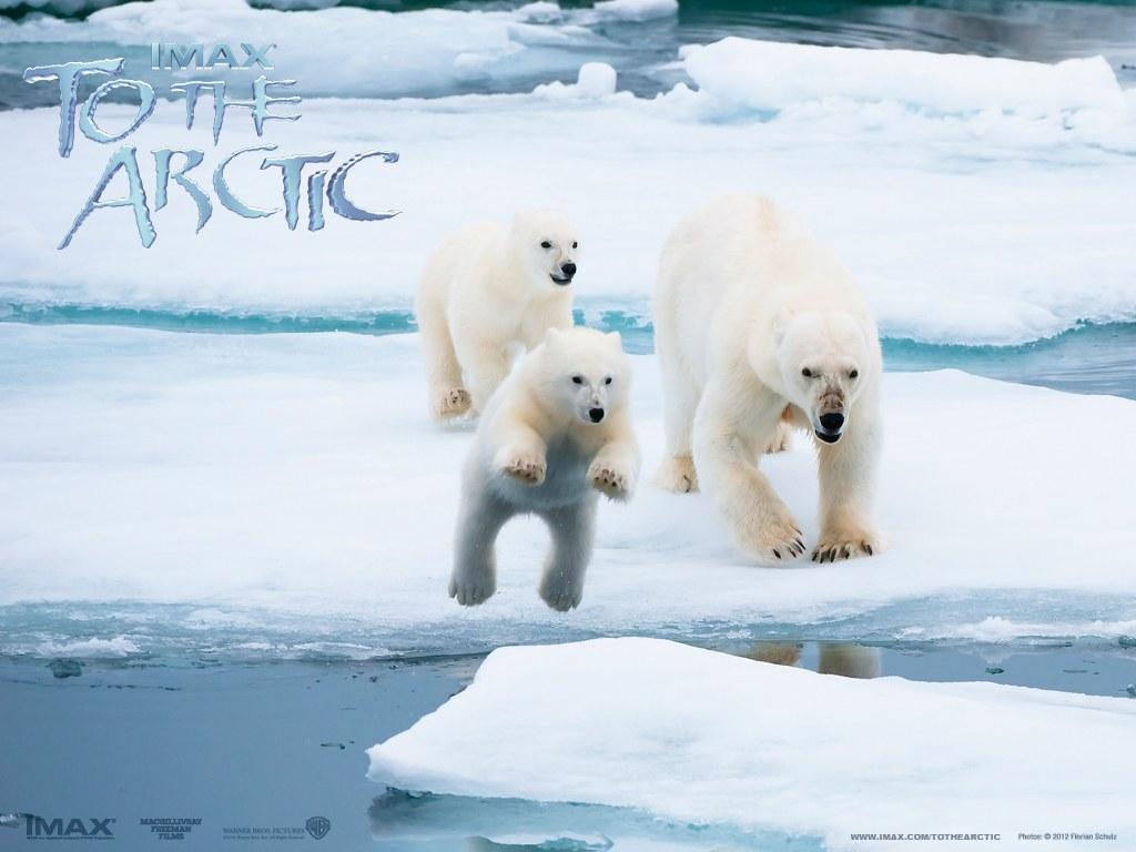 To the Arctic 3D - Bild 3