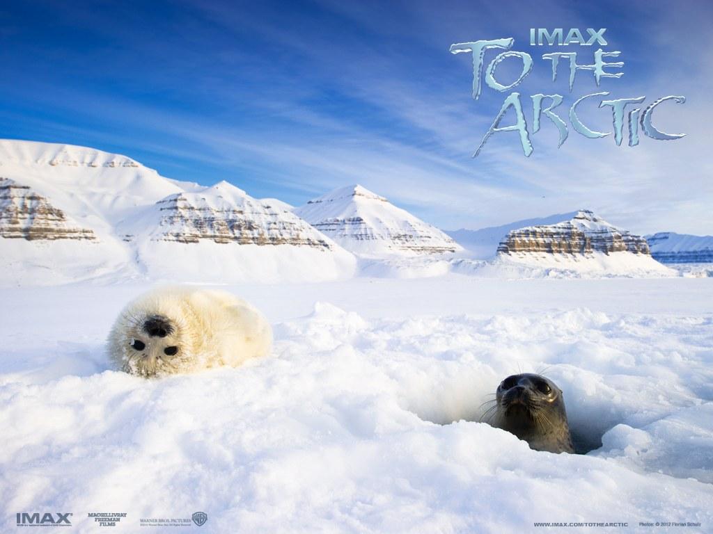 To the Arctic 3D - Bild 4