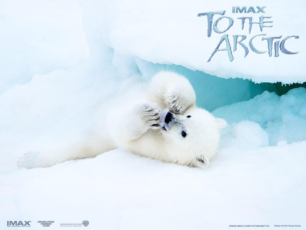 To the Arctic 3D - Bild 5