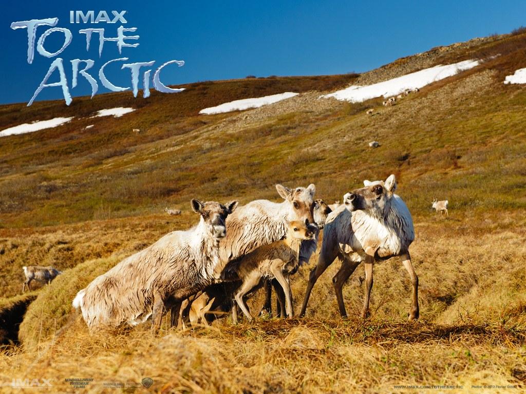 To the Arctic 3D - Bild 6