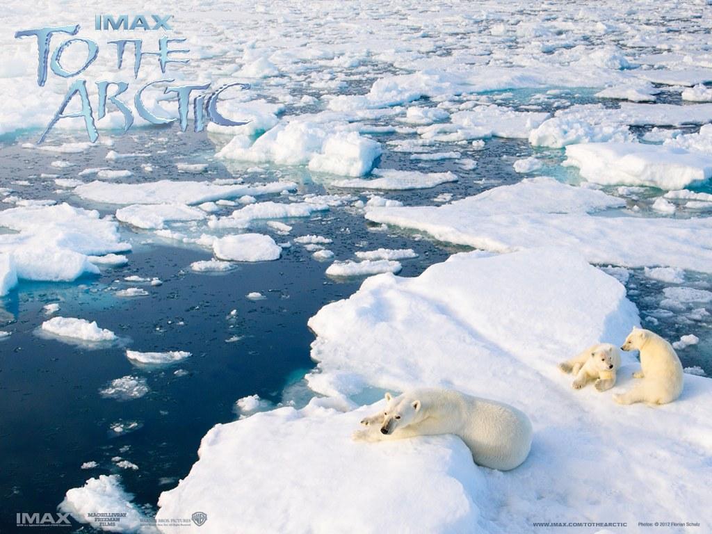 To the Arctic 3D - Bild 7