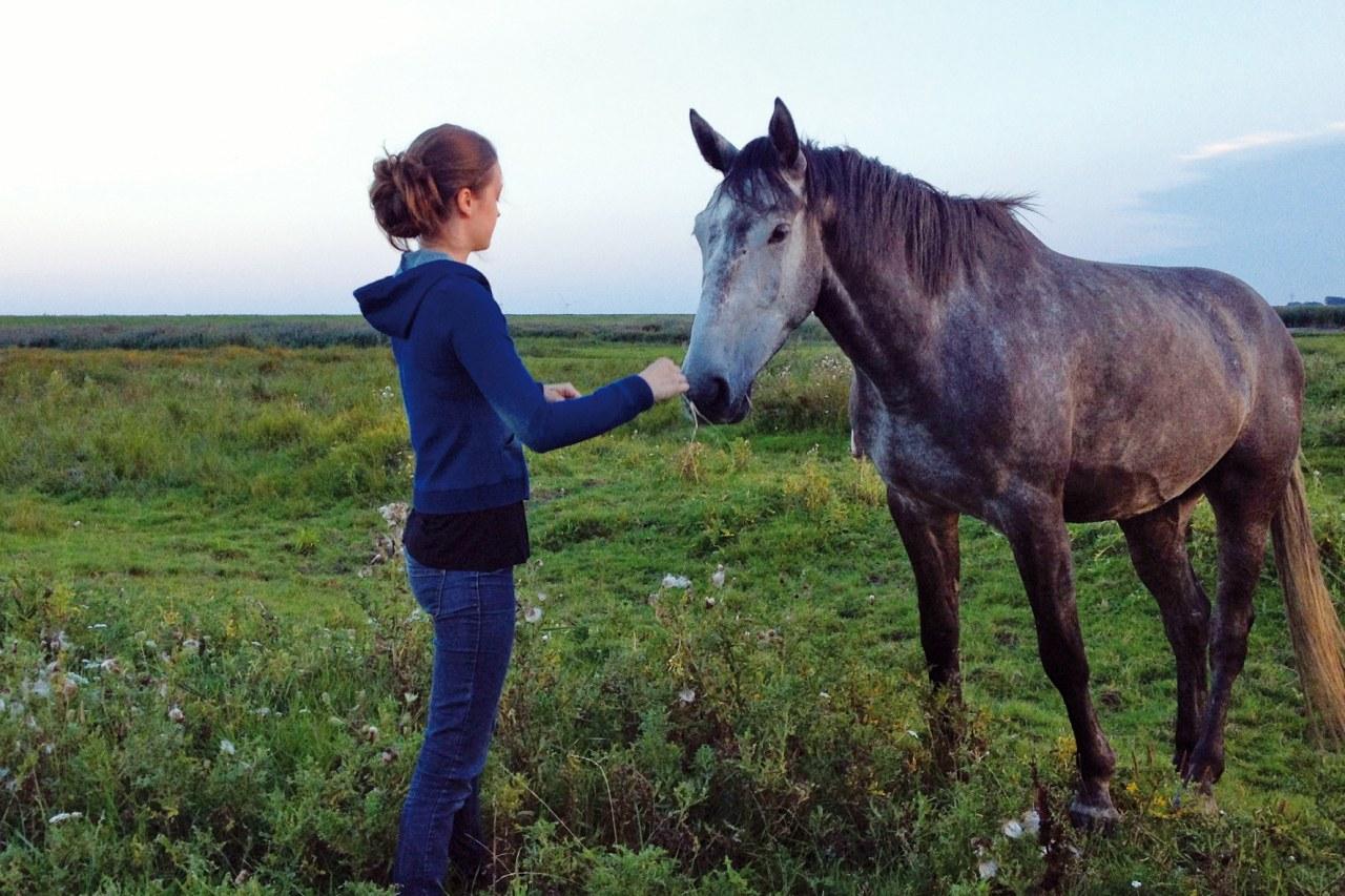 Von Mädchen und Pferden - Bild 2