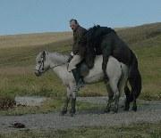 Von Pferden und Menschen - Bild 1