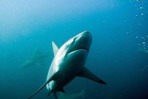 Wild Ocean 3D - Bild 1