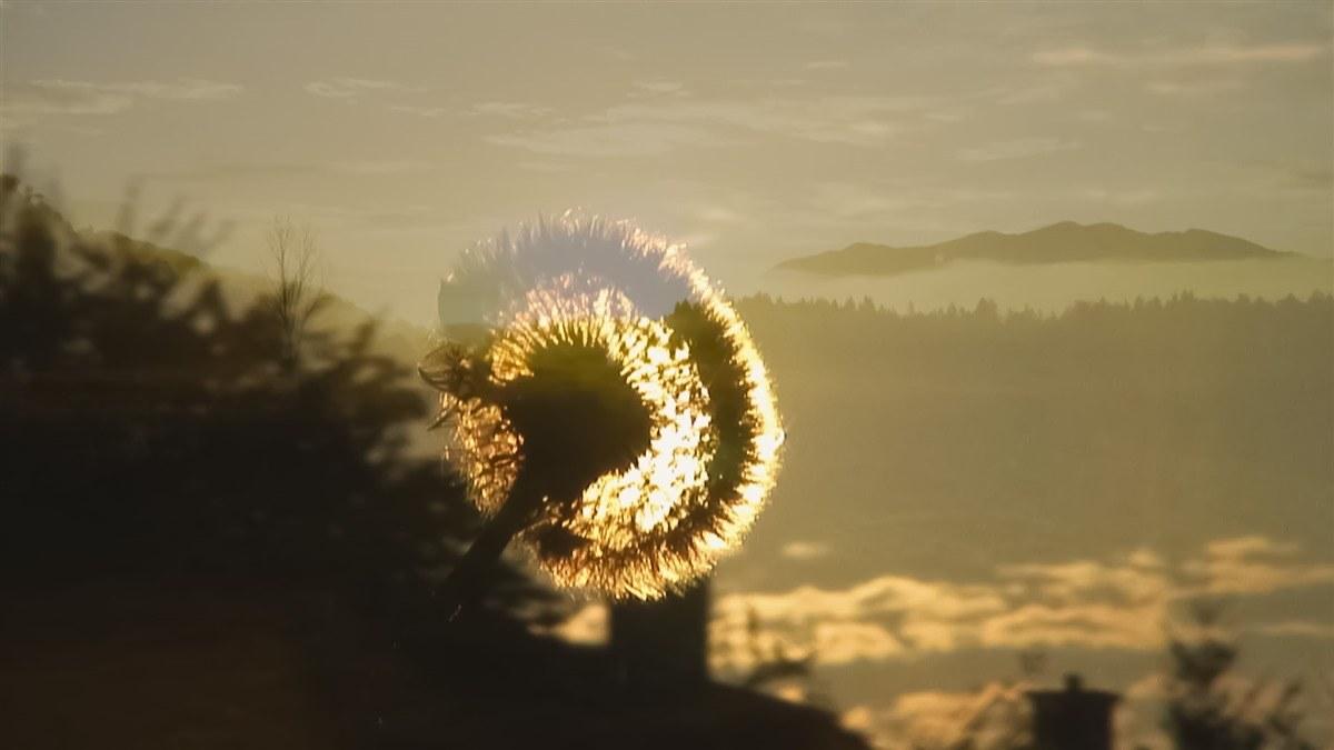 Wunder der Lebenskraft - Bild 4